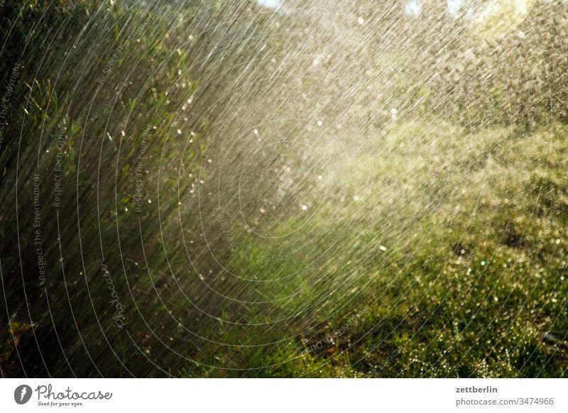 Rasersprenger frühjahr frühling natur urban garten schrebergarten kleingarten rasensprenger regen beregnung gras wiese wasser tropfen nass menschenleer