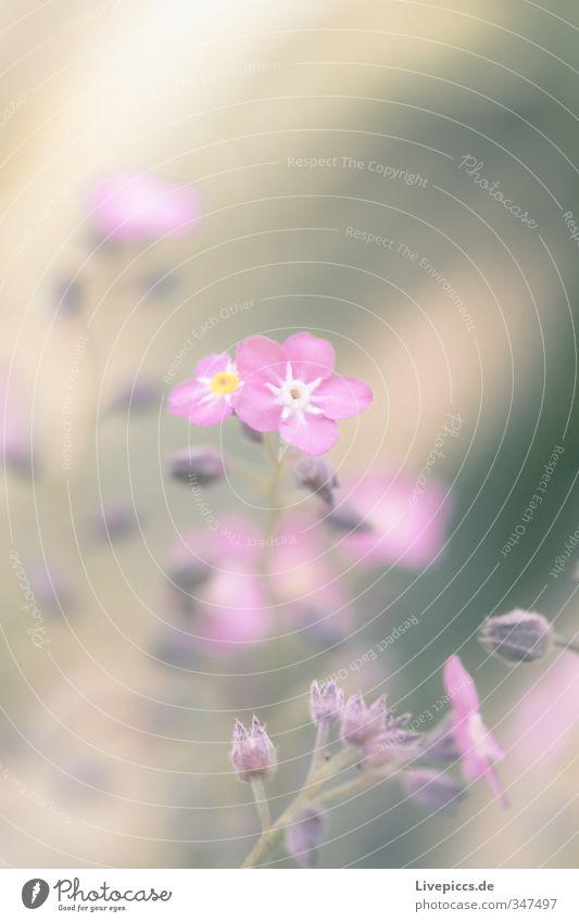 Blume im Frühling Natur schön Pflanze Blatt Umwelt Wiese Wärme Blüte Garten hell natürlich rosa Park elegant