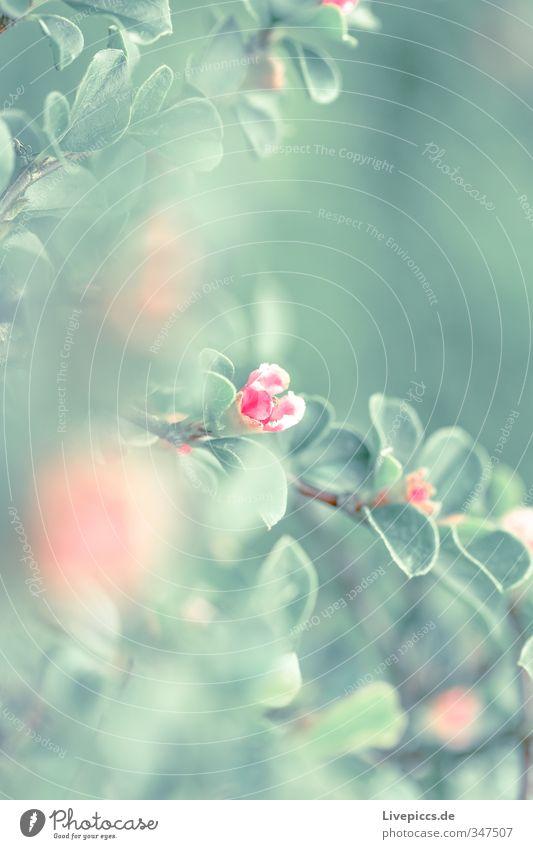 Blume im Frühling Natur grün Pflanze Landschaft ruhig Blatt Umwelt Wiese Wärme Blüte Garten rosa orange Park