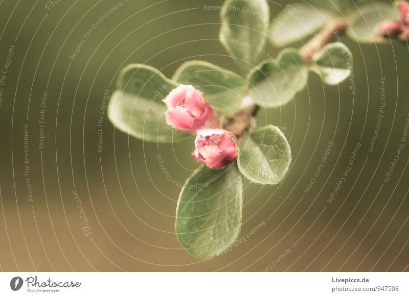 Blume im Frühling Umwelt Natur Pflanze Sonnenlicht Blatt Blüte Nutzpflanze Garten Park Wiese Blühend Duft leuchten ästhetisch dünn elegant frisch hell schön