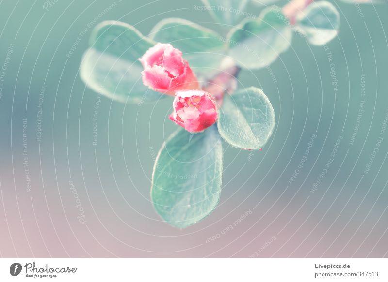 Blume im Frühling Natur grün Pflanze Landschaft Blatt Umwelt Wiese Wärme Blüte Garten rosa Park Idylle leuchten