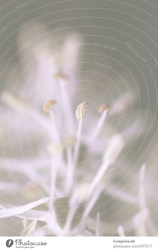 Blume im Frühling Natur weiß Pflanze Landschaft ruhig Blatt Umwelt Wiese Wärme Blüte klein Garten rosa orange