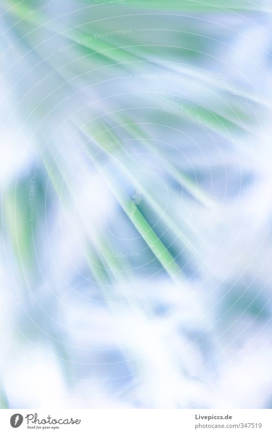 ...hinter den Blüten Umwelt Natur Pflanze Frühling Blume Blatt Nutzpflanze Blühend Duft sportlich frisch Wärme wild grün weiß Vorsicht Gelassenheit geduldig