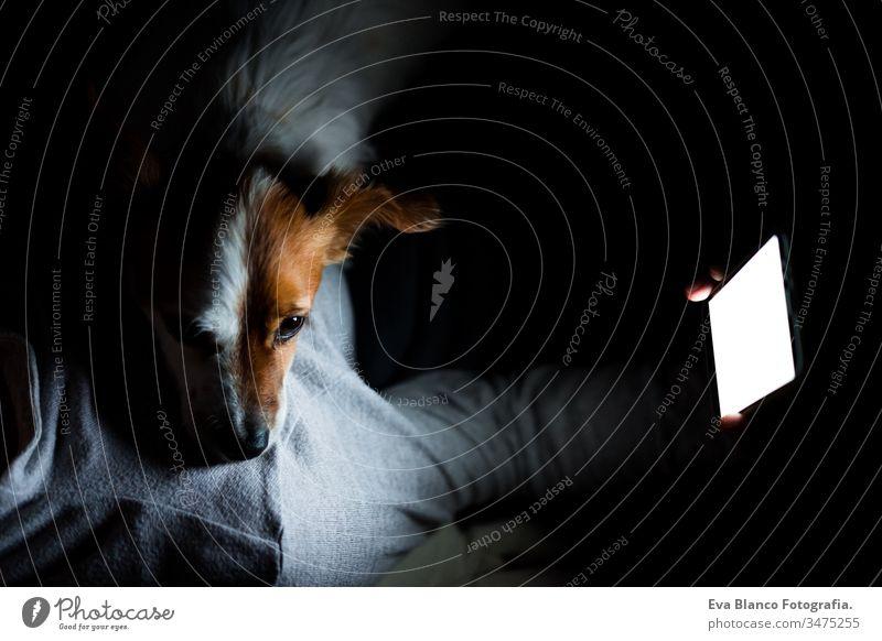 junge frau zu hause mit mobiltelefon. süßer jack russell hund bei ihr liegend. Nachtzeit Frau Handy heimwärts Bildschirm dunkel Hund Haustier