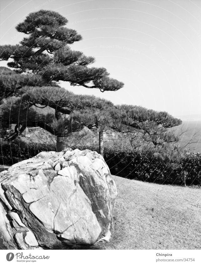 Zen Stein Japan Zen Kiefer Buddhismus Shizuoka