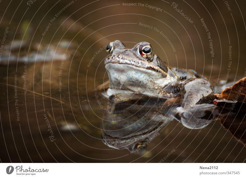 Heute wieder kein Quakwetter :( Natur Wasser Sommer Einsamkeit ruhig Tier Umwelt Auge Frühling See Garten träumen braun Wetter warten Schönes Wetter