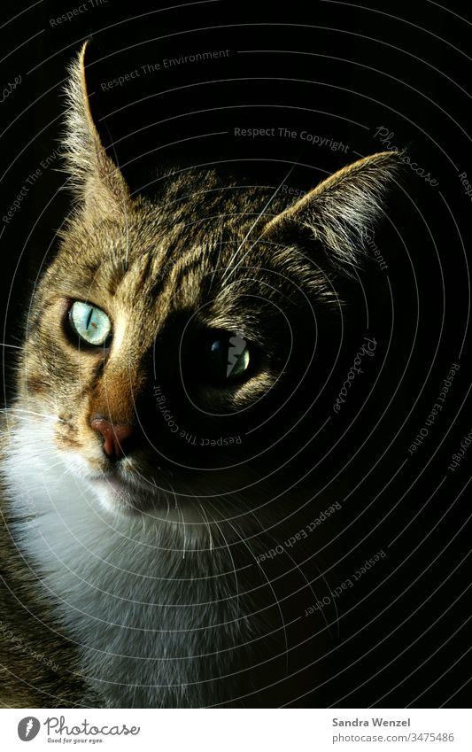 Floki der Kater Katze Tierhaltung Gesellschaft Katzenfreund Tigerkatze Streuner Lowlight artgerecht Katzenfutter Aura Charakter