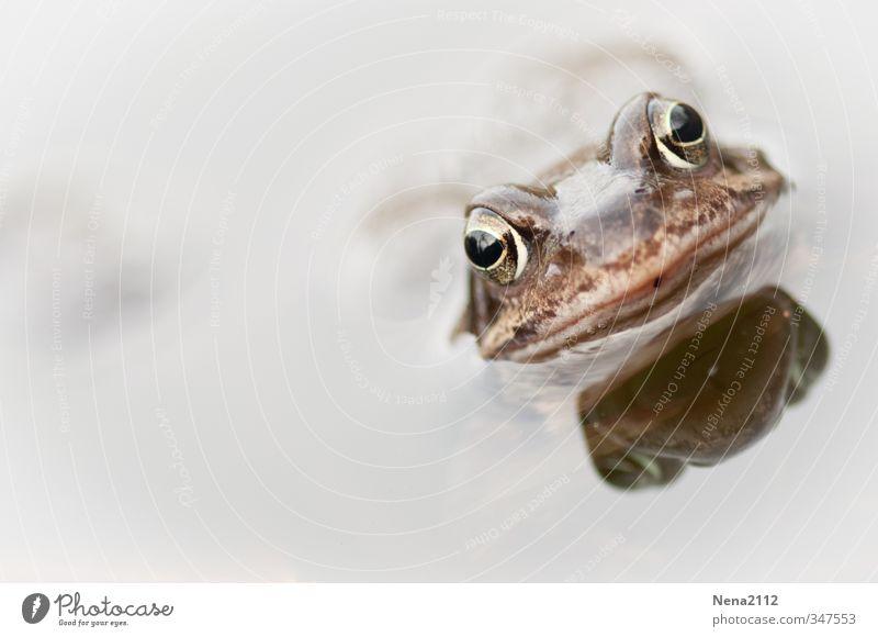 Frosch aus der Vogelperspektive Umwelt Natur Tier Wasser Frühling Sommer Klima Garten Park Feld Wald Teich See Tiergesicht 1 atmen hängen Schwimmen & Baden hell