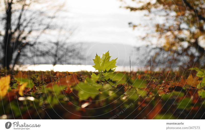 Mit Seeblick Umwelt Natur Pflanze Sonne Sonnenlicht Herbst Schönes Wetter Baum Blatt Grünpflanze Wildpflanze Park Seeufer dünn authentisch natürlich trocken