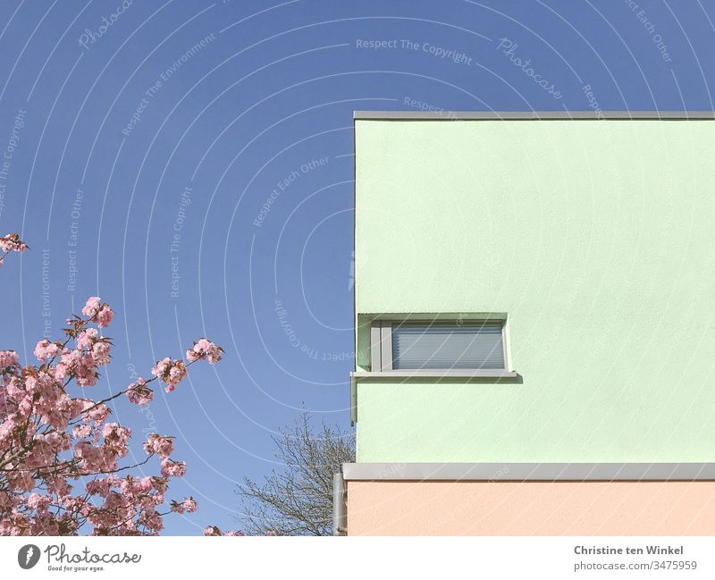 Bunte Gebäudefassade und  rosa Blüten vor blauem Himmel Fassade bunte Fassade Fenster modern eckig ästhetisch Gebäudeteil Froschperspektive Perspektive Wand