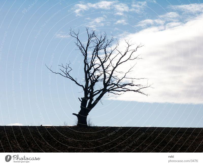 einsamer Baum Himmel Wolken Feld
