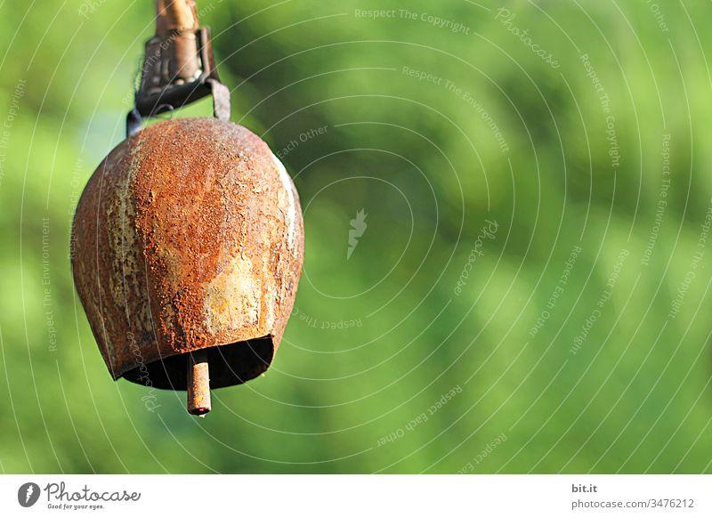 Geräusche l Kuhglockengebimmel auf der grünen Weide am Sonntag. Glocke läuten Klingel alt hängen Metall Kuhweide Wiese Rasen Kuhherde bimmeln Detailaufnahme