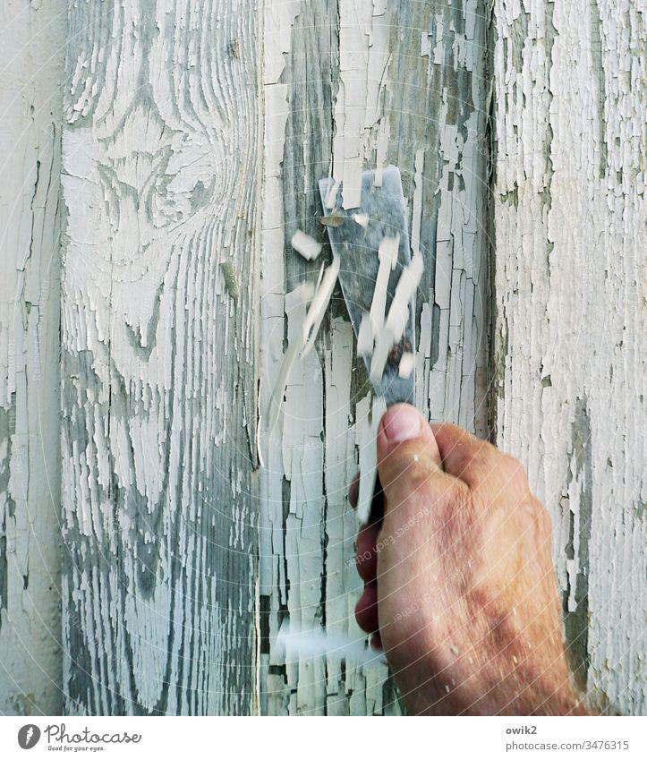 Mühsam ernährt sich das Eichhörnchen arbeiten Hand Spachtel abkratzen Farbe abblättern fleißig emsig aufmerksam ermüdend mühsam Wand Gartenlaube FarbeReste