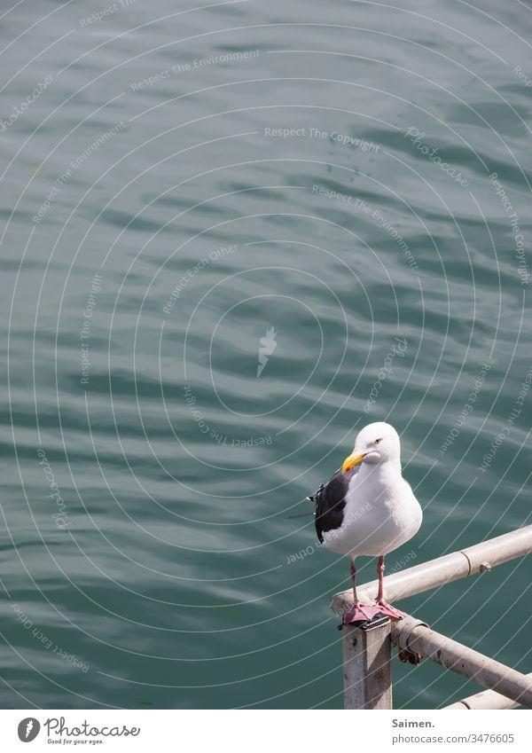 Eckenkind sich[Akk] bewegen vogel Vogelwelt Stufe Tierporträt Natur Meer Wasser Geländer federn Schwingen Lebewesen ozean