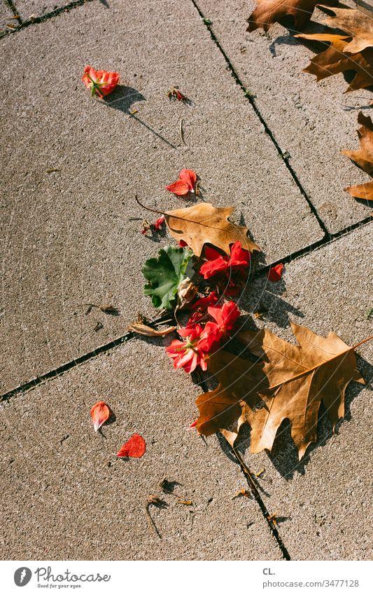 blätter auf boden Blätter Blatt Boden Herbst herbstlich Außenaufnahme Natur Farbfoto Menschenleer braun rot Blüte Jahreszeiten fallen Draufsicht Herbstlaub