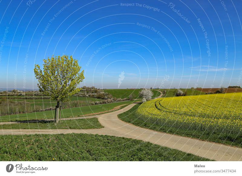 Frühlingslandschaft. Buntes Rapsfeld in Deutschland kultiviert. geblümt Beziehung natürlich Blüte Samen Land Ackerland Öko Horizont sonnig Panorama Ackerbau