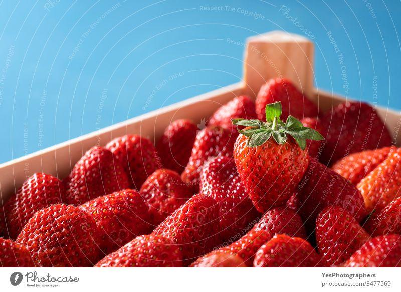 Erdbeeren in einer Schachtel. Reife Bio-Erdbeeren in Nahaufnahme Ackerbau Beeren Blauer Hintergrund Kasten farbenfroh Container Kiste Ernte lecker Dessert Diät