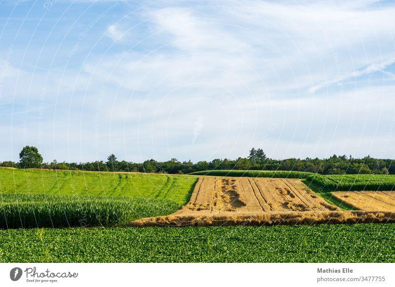 Weizenfeld im Spätsommer Stoppelfeld ländlich Umwelt Bäume grün Nutzpflanze Pflanze Horizont Ferne Ähren Gerste Strohballen Traktorspur Hügel blau orange