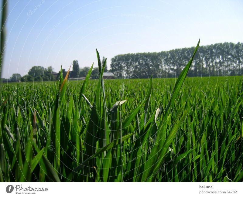 Eschmarer Mühle Natur Himmel Baum grün Gras Landschaft Feld Getreide