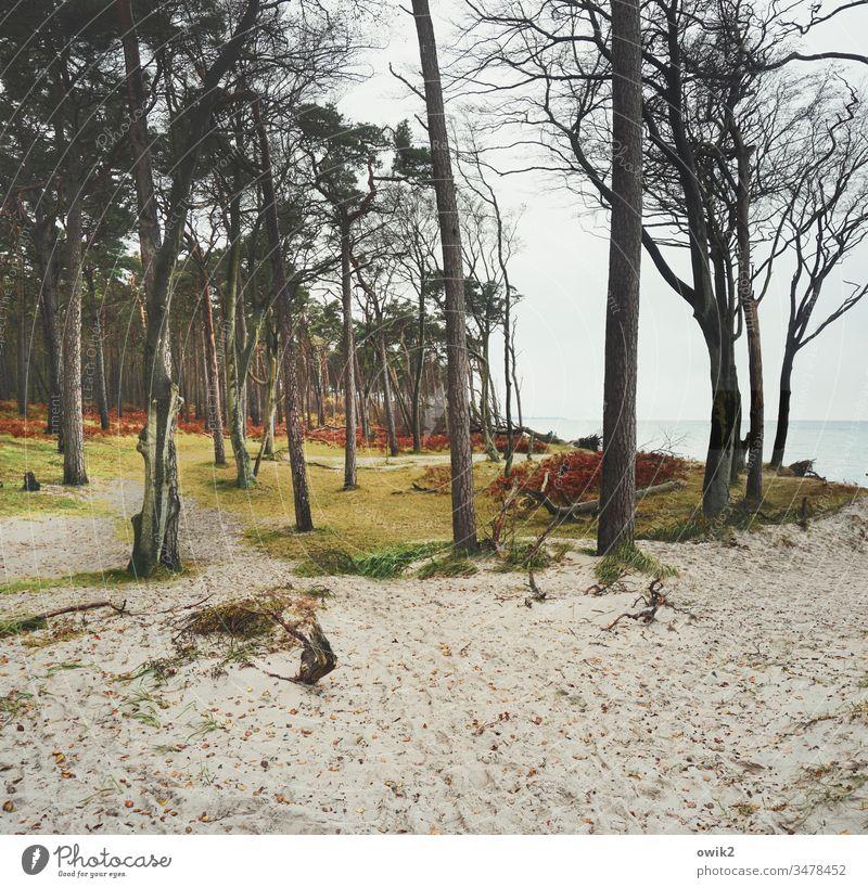 Sandkasten Darß Strand Ostsee Küste Meer Himmel Natur Wasser Farbe Weststrand Fischland-Darß-Zingst Bäume Wolkenloser Himmel