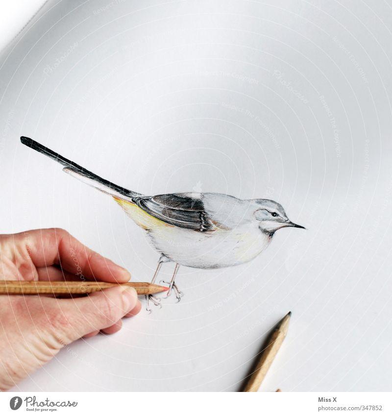 Vögelchen Freizeit & Hobby Finger Kunst Künstler Maler Kunstwerk Gemälde Tier Vogel 1 zeichnen Kreativität Zeichnung Zeichenstift Bleistift Zeichenblock