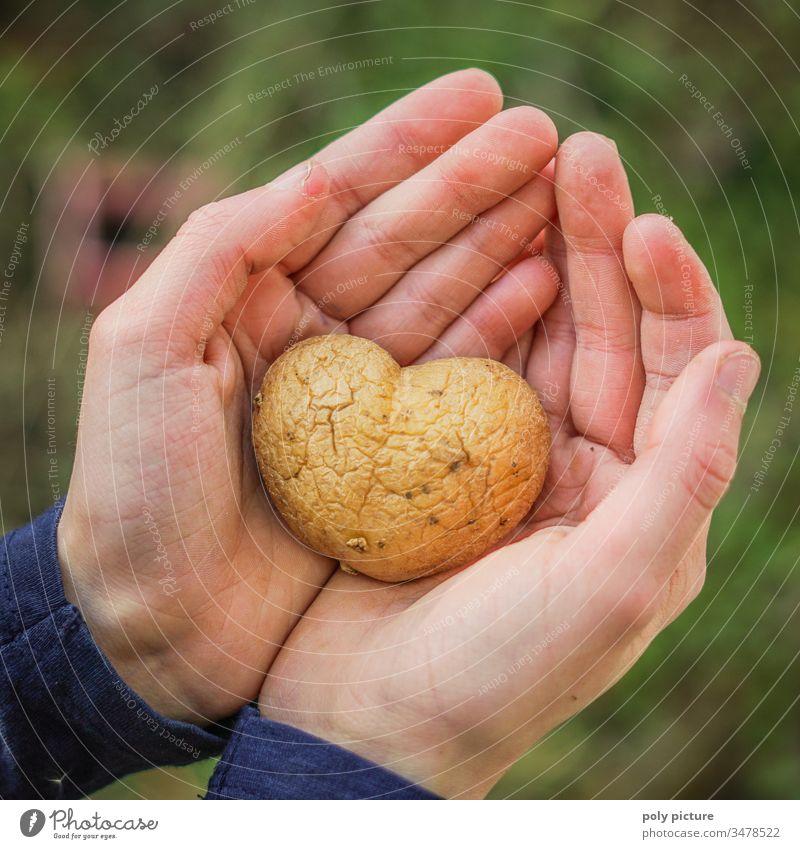 Kinderhand hällt Kartoffel in Form eines Herzens Freizeit & Hobby Schwache Tiefenschärfe Kindheit Leben Hand Unschärfe Umwelt Natur Klimawandel Nahaufnahme