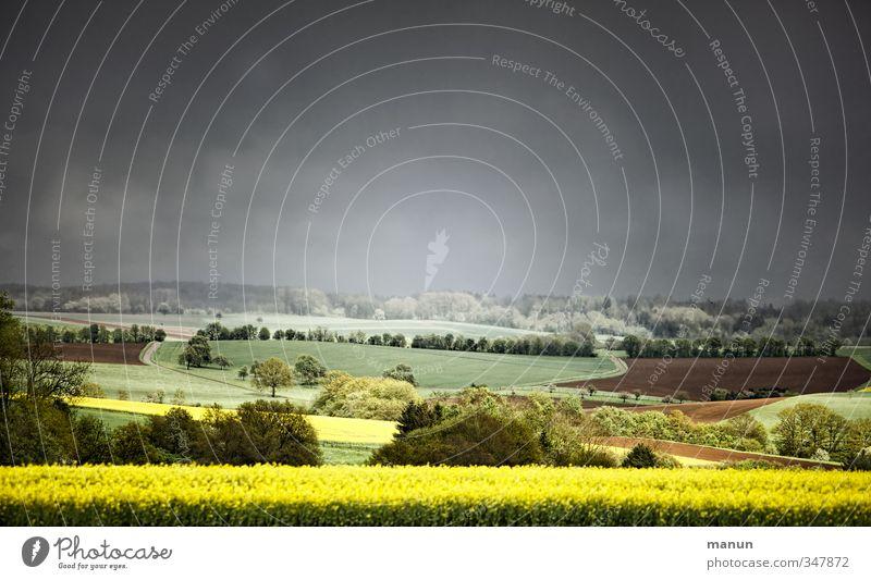 Frühling 2013 Landwirtschaft Forstwirtschaft Natur Landschaft Himmel Wolken Gewitterwolken Horizont Klima Wetter schlechtes Wetter Wind Sturm Regen Nutzpflanze