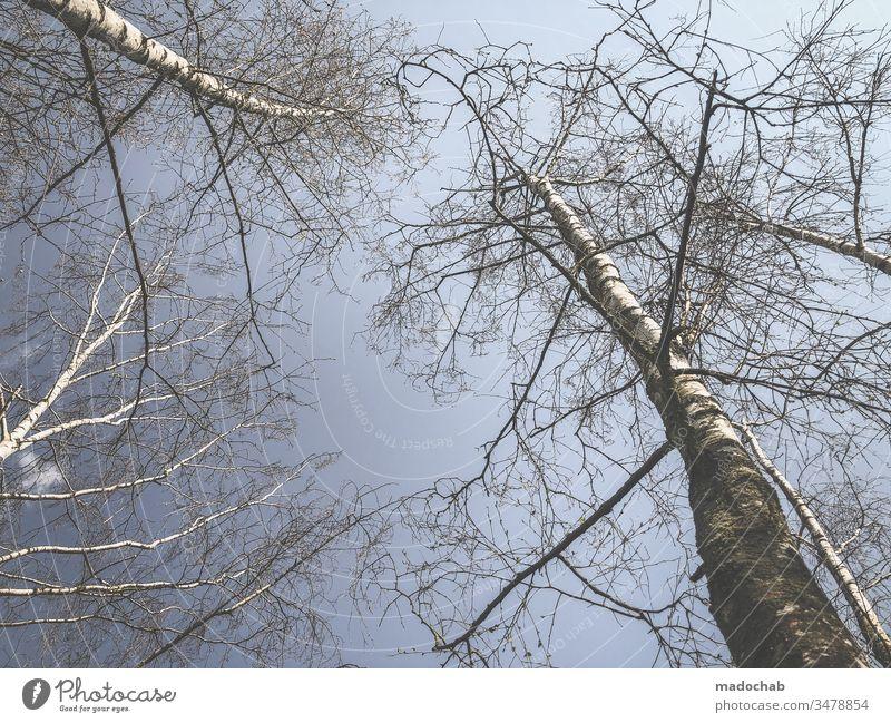Birken strecken sich in die Höhe Baum Natur Umwelt Wald Birkenwald Pflanze Landschaft Schönes Wetter Menschenleer Außenaufnahme Farbfoto Tag Zentralperspektive