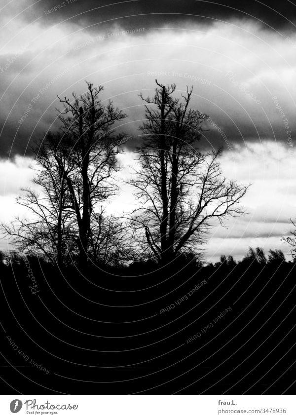 Philemon und Baucis hätten nicht inniger ihre kahlen Äste dem wolkenverhangenen Himmel entgegenstrecken können wie dieses Baumpaar. Bäume Ostsee Winter Urlaub
