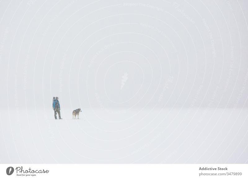 Mann geht mit Hund in verschneiter, stürmischer Landschaft Schnee Winter kalt Haustier Wetter männlich Frost Natur Freund weiß Eckzahn Zusammensein Reinrassig