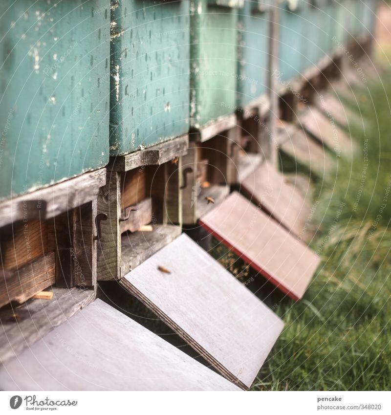 summa summarum Sommer Pflanze Landschaft Tier Wiese Gras Arbeit & Erwerbstätigkeit fliegen Häusliches Leben Urelemente süß Verstand Zusammenhalt Biene lecker