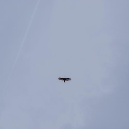 Adler adler vogel Lebewesen fliegen freiheit Kraft Kraftvoller Stärke Amerika USA Tierporträt Himmel glaube Schwingen Vogelwelt Natur federn Stufe
