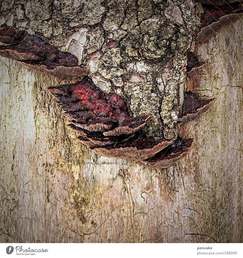 die siedler Natur Pflanze Urelemente Baum Wald Holz Zeichen Diät gebrauchen hängen hocken tragen Pilz Baumpilz Baumrinde entern einnehmen besiedeln