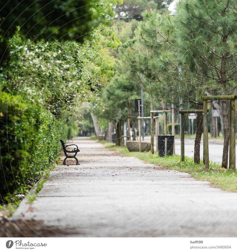 einsame Parkbank im Park Frühlingsgefühle Isolation EInsam Allein wir bleiben zu Hause Leere Quarantäne zu Hause bleiben Coronavirus Virus Pandemie Schutz