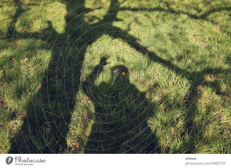 Schatten von winkender Person und Baum auf grüner Wiese mit gelben Löwenzahnblüten als scheinbare Augen Schattengespenst Humor Blüte lustig Spass Sonnenschein