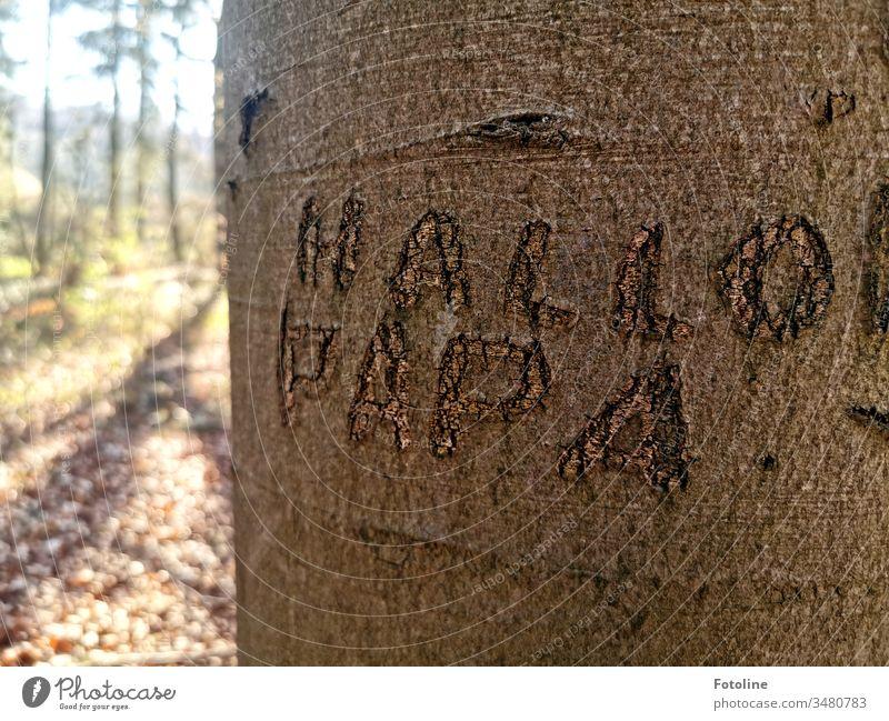 """Hallo Papa! - oder ein Baum, in dessen Rinde der Schriftzug """"Hallo Papa"""" geritzt wurde. Wald Natur Landschaft Außenaufnahme Menschenleer Farbfoto Umwelt Tag"""