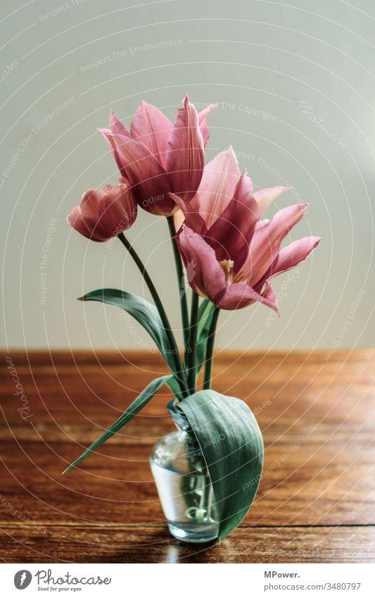 tulpenzeit Tulpen Blumen blumenvase tisch rosa blühen frühling bunt schön