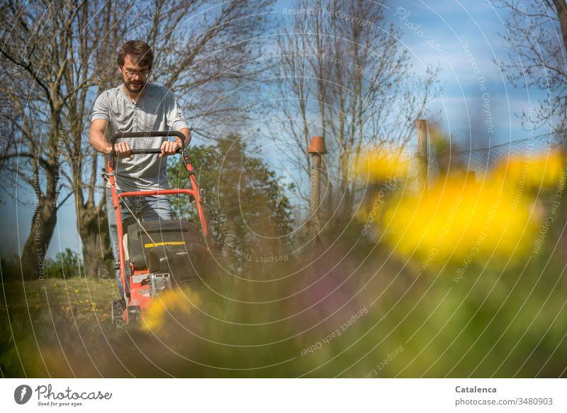 Ein junger Mann mäht Rasen bei schönstem Frühlingswetter, im Vordergrund bangt der Löwenzahn um sein Leben Rasenmäher rasenmähen Unkraut Pflanze Blüte Gelb Blau