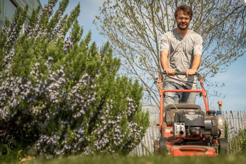 Der junge Mann mäht Rasen bei bestem Frühlingswetter, links im Bild blüht  Rosmarin. Rasen mähen Froschperspektive Gras Garten Natur Gartenarbeit Grün Himmel