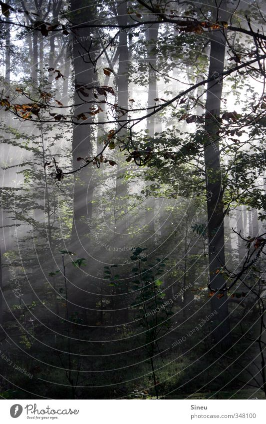 Wenn du denkst es geht nicht mehr... Natur grün schön weiß Pflanze Baum Erholung Einsamkeit ruhig Wald Wege & Pfade natürlich träumen außergewöhnlich