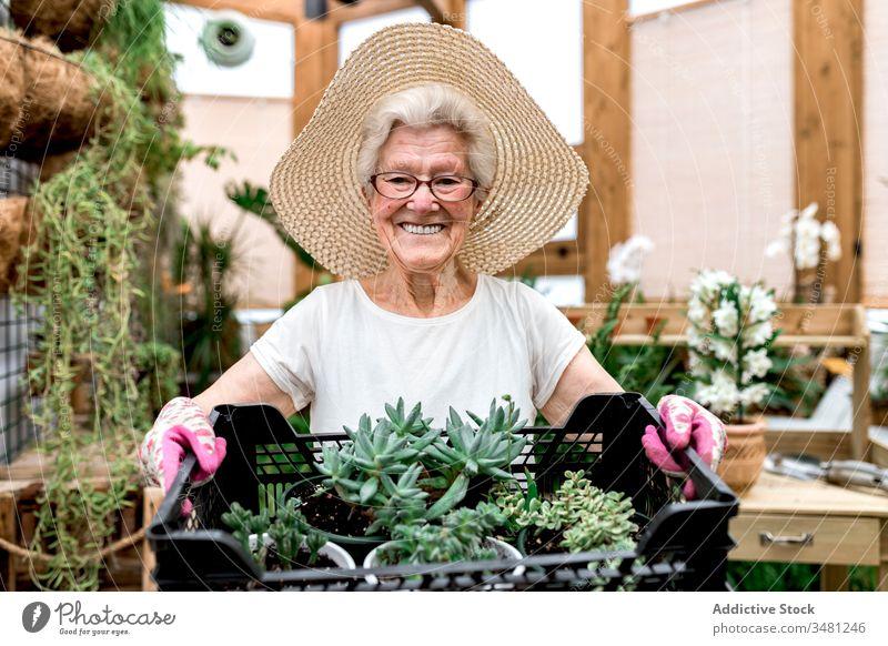 Glücklicher älterer Gärtner mit Kiste Sukkulenten Frau Kasten Gewächshaus Lächeln führen Hobby Arbeit Pflanze Senior Ackerbau organisch Garten frisch Botanik