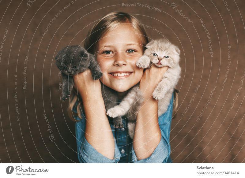 Das Kind hält schöne britische Kätzchen in verschiedenen Farben in den Händen von Frau Fröhlichkeit Lächeln wenig weiß heiter Porträt Mutter Kaukasier hübsch