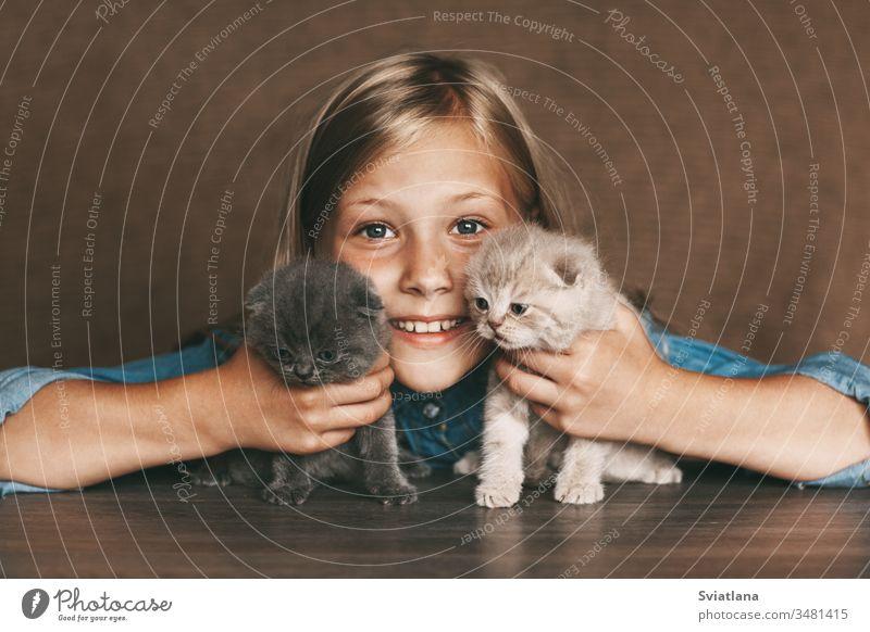 Das Kind hält schöne britische Kätzchen in verschiedenen Farben in den Händen von Hand Lifestyle wenig weiß Nahaufnahme Gesundheit Kaukasier heimwärts Frau