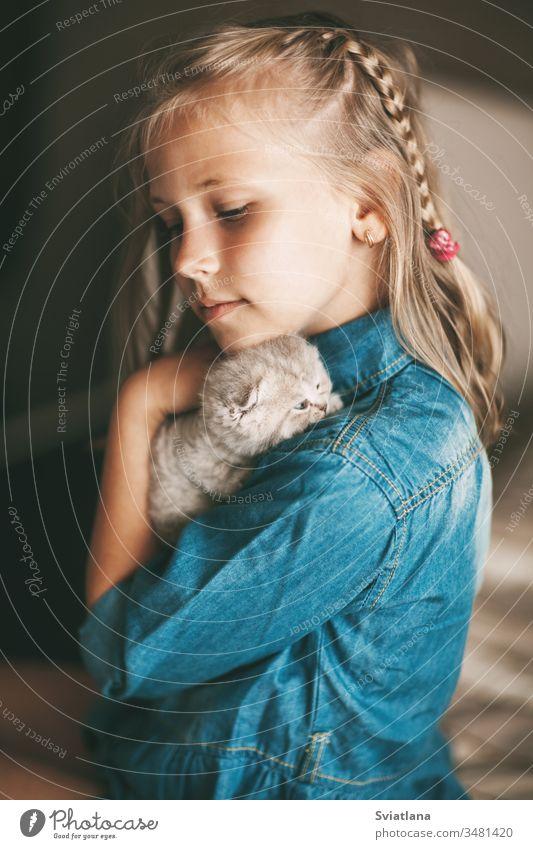 Mädchen umarmt und spielt ein kleines britisches Kätzchen schön Porträt Schönheit Frau hübsch Person Model Kaukasier Glamour heiter Erwachsener attraktiv