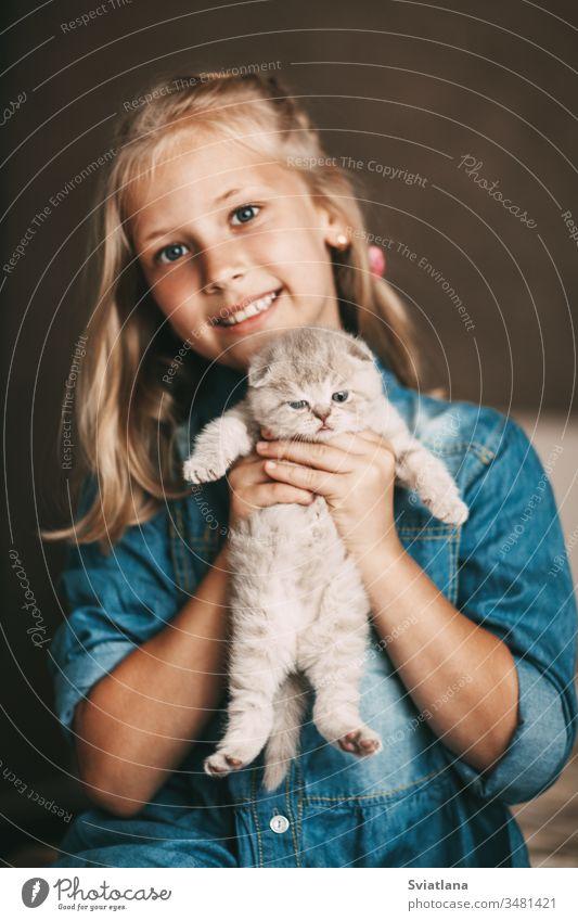 Mädchen umarmt und spielt ein kleines britisches Kätzchen schön Porträt Person Frau heiter Lächeln Fröhlichkeit Kaukasier weiß Behaarung Beteiligung Schönheit