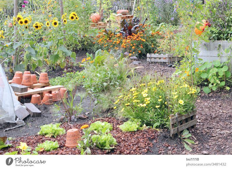 Lieblingsplatz Garten tontöpfe Tontopf umtopfen Blumen Stauden Gartenarbeit Kürbis Sonnenblumen Sommer Hobby Einblick Freude Spaß Erholung Entspannung