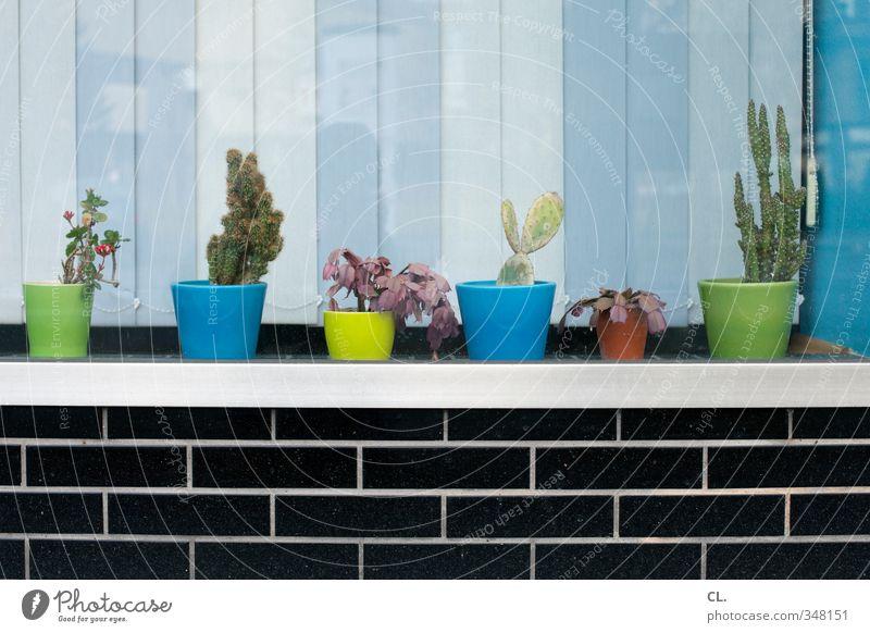 schöner wohnen Pflanze Blume Blatt Haus Fenster Wand Mauer Blüte Wohnung Häusliches Leben Dekoration & Verzierung einzigartig Fensterscheibe Blumentopf einrichten Kaktus