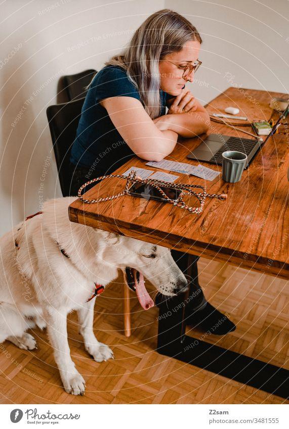 Homeoffice mit Vierbeiner homeoffice zuhause arbeiten laptop telefon handy corona esstisch zufrieden entspannt Quarantäne Computer Büro Business Arbeitsplatz