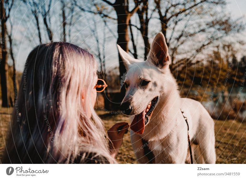 Frauchen mit Hund hund gassi erziehung haustier training leckerlie bestechung draußen sommer sonne wärme schäferhund weiß schönheit aufmerksam tierliebe