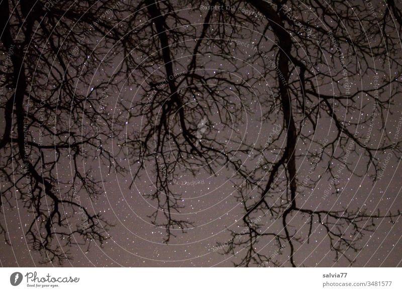Sternenhimmel mit wurzelförmigen Ästen im Vordergrund Nacht Natur Umwelt Baum Äste und Zweige Astronomie Menschenleer Außenaufnahme Nachthimmel Sternbild Himmel